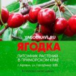 Yagodka-Artem